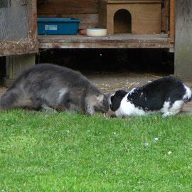Pünktchen hilft Fee bei der Mäusejagd; Juni 2008