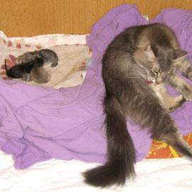 Fee mit ihren 1 Tag alten Kitten 05/2006 (Foto: S. Schimmel)