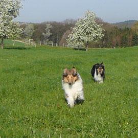 Spaziergang im April 2010
