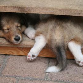 Seltsame Schlafpostitionen in der Mittagszeit :-)