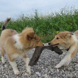 Das erste Wiedersehen mit seiner Schwester Bailey