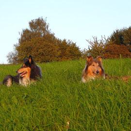 Auf dem Heimweg: Klara & Meggy in der Abendsonne