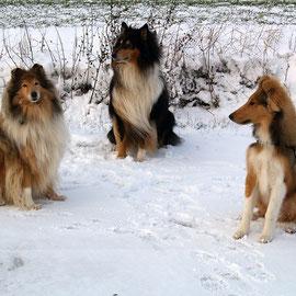 Jodie, Balou, Bjarki