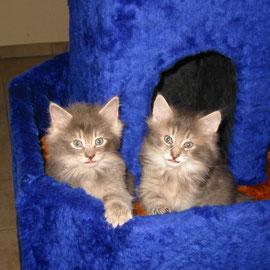 Fee (rechts) 6 Wochen alt mit Schwester Finchen (Foto: S. Schimmel)