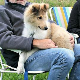Bennett, der Schoßhund :-)