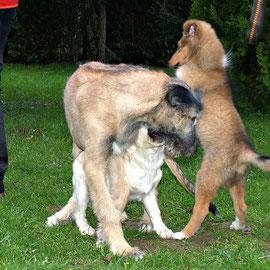 """""""Da sag noch einer, ich wäre kleiner als der irische Wolfshund!"""""""