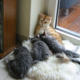 10 Wochen alt mit Mama Felidae (Foto: S. Schimmel)