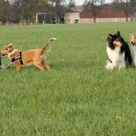 Die vier Musketiere warten auf Murphy und Sammy ;-) v.li. Bennett, Boots, Klara, Meggy