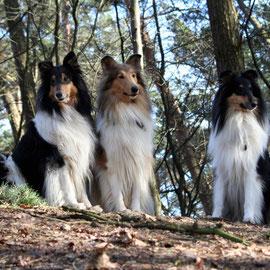 Ohligser Heide 03/2010; v. l. Klara, Meggy, Franki  (Foto Ch. Schulze)
