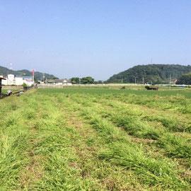 休耕田の草刈り2