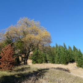 der Steig zur Alm führt durch natürlichen Mischwald und Almwiesen