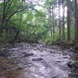 候補地のすぐ近くを、西荒川が流れています。