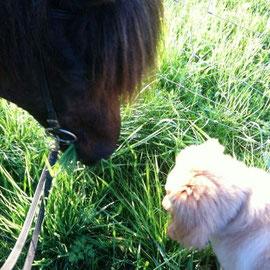 Wenn das Pferd das so lecker findet, muss Booker auch mal probieren....