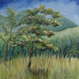 Bayrische Savanne, Acryl, 50x50, 2009