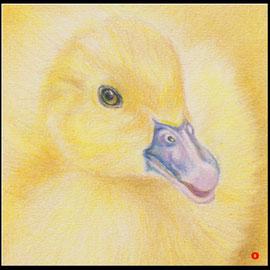 Tierzeichnung,Tier Zeichnung,Gänseküken,Farbstift
