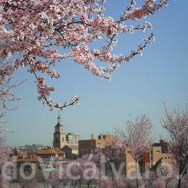 Cerezos en el parque de Valdebernardo. 13 de marzo de 2012