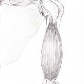 Aquila-images-Boaz-George-medizinische-Illustration-Bisceps-Brachii-Muskel