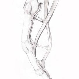 Aquila-images-Boaz-George-medizinische-Illustration-Flexor-Sehnen-Finger