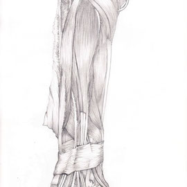 Aquila-images-Boaz-George-medizinische-Illustration-hintere-Unterarm-Muskeln