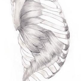 Aquila-images-Boaz-George-medizinische-Illustration-Serratus-Anterior