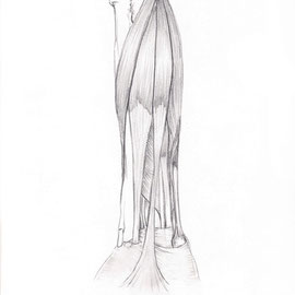 Aquila-images-Boaz-George-medizinische-Illustration-Unterarm-Superficial-Muskeln-vorne