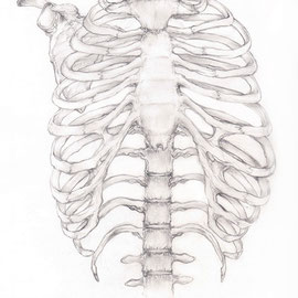 Aquila-images-Boaz-George-medizinische-Illustration-Brustkorb