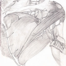 Aquila-images-Boaz-George-medizinische-Illustration-Scapula-Region