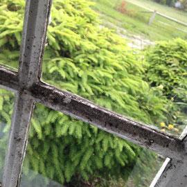 Diese alten Fenster und Fensterrahmen...