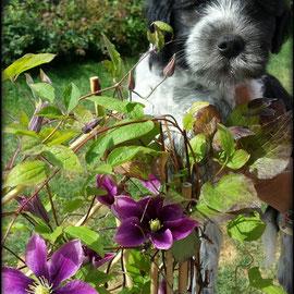 Lennon und die Clematis (eine der wenigen Pflanzen die die Attacken der Tattelots überlebt haben)