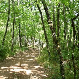 Sentier dans le bois de Païolive, proche Les Vans en sud Ardèche