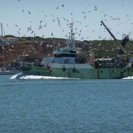 Sardinen-Fischer bei der Heimkehr