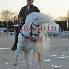 Démonstration de reprise avec un cheval PRE (Pur Race Espagnol) - cheval Passion à Avignon 2014