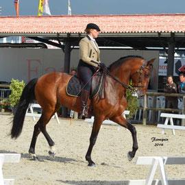 Equitation de Travail - Salon Equitaine BORDEAUX 2014