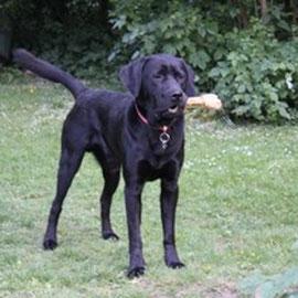 Ich bin der Prince alias Benito, gehe fleißig und mit gutem Erfolg zur Hundeschule und mache meinen Zweibeinern viel Freude.