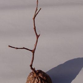 lived~植物