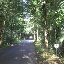Lichter Eichenwald in Schleswig-Holstein