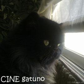 """Crea para tu gato un espacio al lado de una ventana. Será su """"cine"""" particular y referencia visual del exterior. Y si la aseguras con algún sistema de protección contra caídas (las hay incluso de quita-y-pon), también alicientes sonoros y olfativos!"""