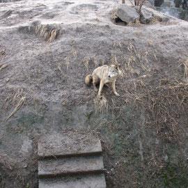 zoo kiew