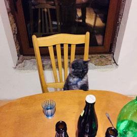 """""""Auch Katzen wollen richtig Party machen"""" von Nicole N."""