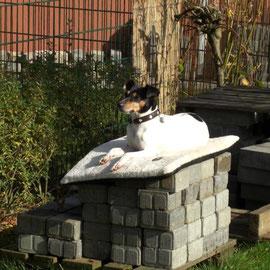 Ein Thron im Garten...