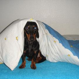 Michel kriecht immer unter die Bettdecke.