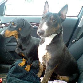 Im Auto schauen Beide sehr interessiert nach vorne.
