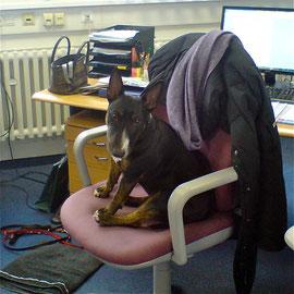 Mausi kommt mit ins Büro, Nov. 2011