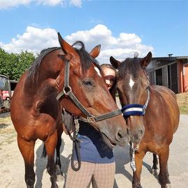 Rigo (links) und Dante mit Michelle, 03.08.2013.