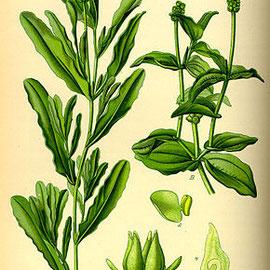 Potamots