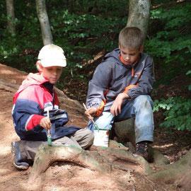 Farbe statt Pflaster - verletzte Bäume und Wurzeln schützen