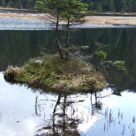 Kleiner Arbersee mit schwimmenden Inseln