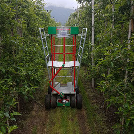 The practical working platform in an apple plant