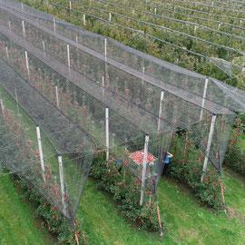 Mehrere Maschinen bei der Apfelernte
