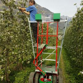 Die praktische Bühne in einer Apfelanlage